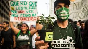 Brazilian Regulators To Vote On Medical Cannabis Proposals