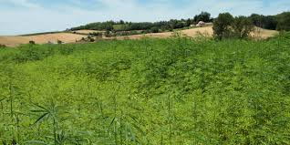 Article – Hemp Industry Daily: Hemp in California: Counties, cities remain divided on production
