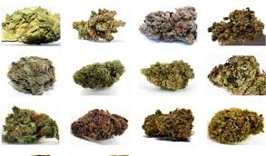 5 Tips For Choosing The Right Cannabis Strains