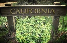 Illegal Seizures Of Cannabis In California Market Equals Estimated Size Of Regulated Market Says Report