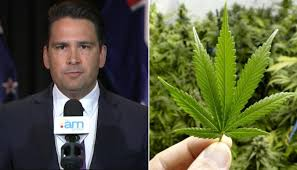 New Zealand: Only 1 Day Into Cannabis Referendum Debate & The Heat Is On