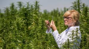 DEA To Grow 3,200,000 Grams Of Research Cannabis In 2020