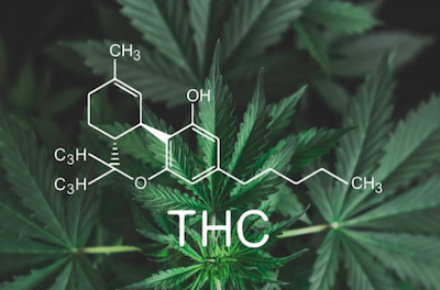 Does CBD Oil Work Without THC?