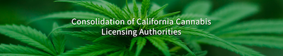 Gov Newsom Proposes Consolidating Three Cannabis Licensing Authorities – More Details In The Spring