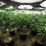 Why You Should Buy a Grow Tent Fan