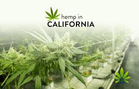 Hemp in California: State to revisit legislation allowing CBD in food, beverages