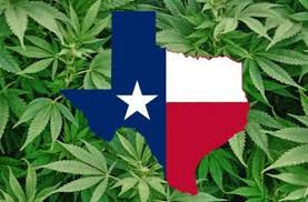 Texas Will Begin Accepting Hemp Production License Applications This Month