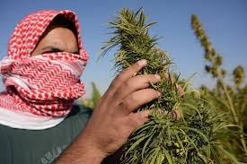 Looks Like Lebanon Only Wants A Regulated Hemp Sector
