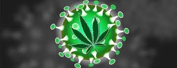 States Deem Medical Marijuana Essential Industry Amidst COVID-19 Emergency