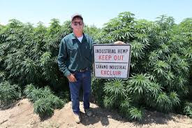 California Hemp Company Wants Kern County Sheriff's Office To Explain Why They Destroyed Hemp Crop Last October