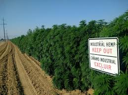 Apothio Sues Kern County, Calif., for Alleged Government Destruction of 500 Acres of Hemp