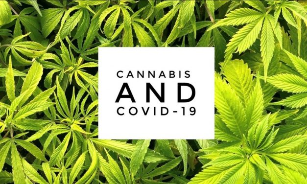 Cannabis Rises To COVID-19 Challenge
