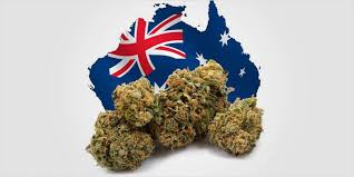 THC Global launches Aust-grown cannabis