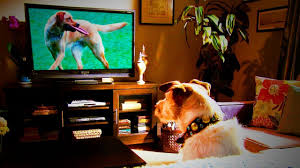 CBD company will pay you $1,000 to binge-watch 10 doggy movies
