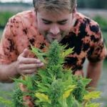 Sustainable cannabis growing methods are the future of the industry