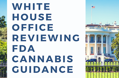 White House office reviewing FDA cannabis guidance