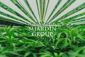 MJardin aborts acquisition of Nevada cannabis edibles maker