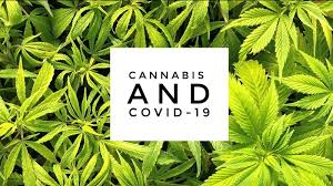 Cannabis Industry And CoVid19 Fighting It Out
