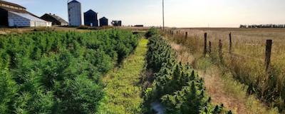 Wyoming: Judge tosses marijuana charges brought against hemp farmers