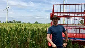 Poland, hemp production growing fast despite legal ambiguity, uneven enforcement