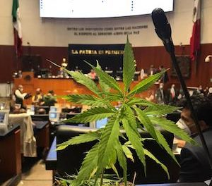 Mexican Senator Tweets Picture Of Cannabis Plant On Her Desk In The Chamber