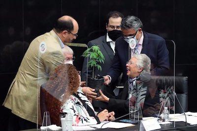 Mexican cabinet member accepts cannabis plant as legislators prepare legalization vote