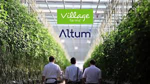 New Outfit Altum Looking To Raise $2Million To Capture Asia Pacific  CBD Market