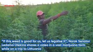 Kenyan Senator Calls For Legalised Cannabis Whilst On Lithuanian Junket