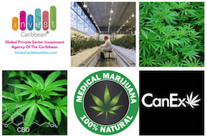 Invest Caribbean Partners With CanEx Capital Connection To Boost Financing In The Cannabis Sector