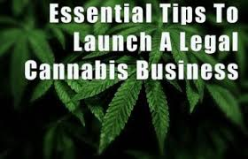 What To Know If You Want To Start A Legal Cannabis Business