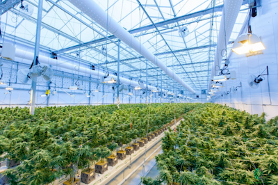 How to Find Your Niche When Starting A Cannabis Business