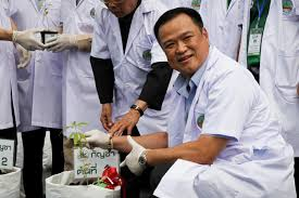Thailand's Health chief plants cannabis as country eyes medicinal market