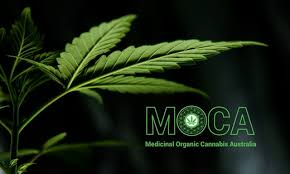 Medicinal Organic Cannabis Australia Aims to Raise up to $500,000 to import its new range of products