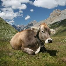 Medicinal Organic Cannabis Australia (MOCA) announces a partnership to produce a CBD product for high end livestock in Europe
