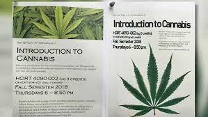 University of Cincinnati Offering Cannabis Studies Certificate Program