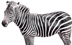 Canada: Kangaroos & Zebras Seized From Illegal Cannabis Farm In Toronto