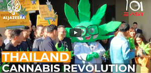 Thailand's Cannabis Revolution | 101 East