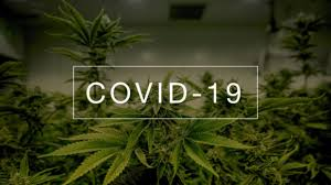 Cannabis and COVID-19: Can Cannabis Oil and Other Preparations Alleviate COVID-19 Symptoms?