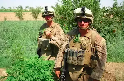 "US Congress Urges Caution To Military Re ""enforcing marijuana-related penalties against service members"" as house approves defense spending bill"
