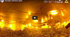 UK – Kent Police Police Video: Cannabis cultivators jailed