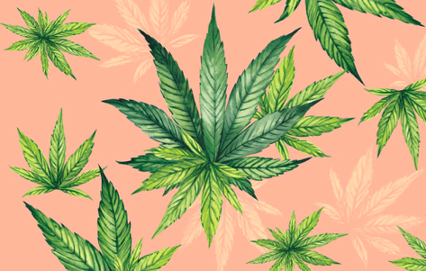 Cannabis is popular throughout Europe but which countries are best for business?
