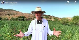Steve DeAngelo – Moroccan Strains