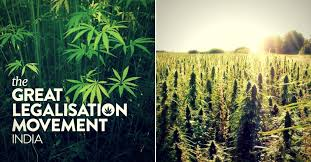 Article: UN Reclassification of Cannabis Could Give India's Legalisation Movement a Boost