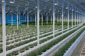 MJ Biz report says Aurora have manged to sell off two greenhouse facilities