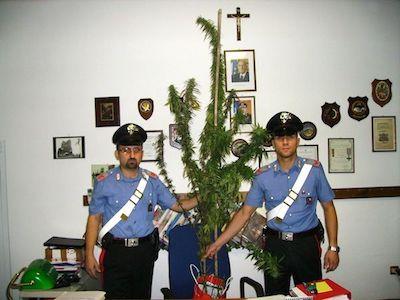 Article: The Crisis of Marijuana Criminalization in Italy