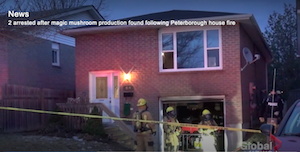 Canada: Magic mushroom production found after Peterborough house fire: police