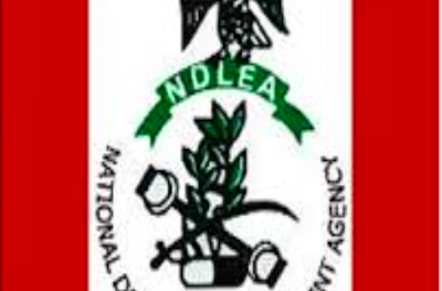 NDLEA seizes 11 tons of cannabis  in Lagos