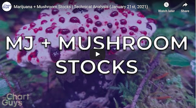 January 21 2021: Marijuana + Mushroom Stocks | Technical Analysis