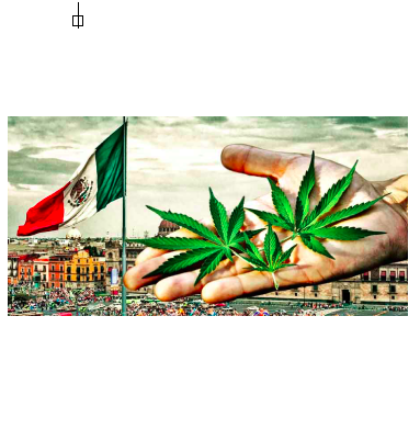 National Law Review Publish Article: Mexico's General Health Law Regulations for the Production, Investigation, and Medicinal Use of Cannabis and Derivatives