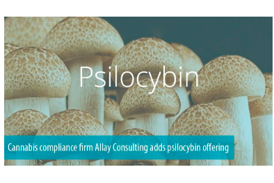 "Allay Consulting Oregon Annouces They Will Be Offering ""regulatory compliance services in the legal therapeutic psilocybin market in Oregon, as well as other jurisdictions that follow suit."